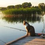 Клев рыбы в Нижегородской области — места ловли