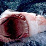 Какие акулы водятся в черном море?