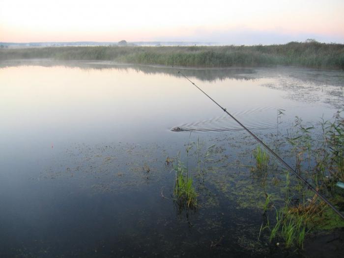 Нарские пруды рыбалка