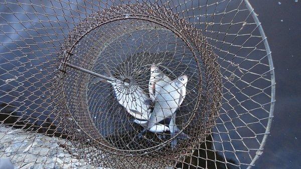 Свердловская область отчеты о рыбалке
