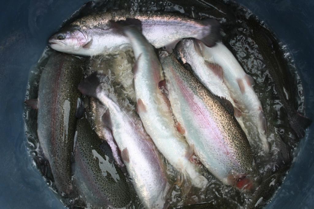 Барыбина рыбалка