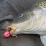 Как и на какие бойлы ловить рыбу?