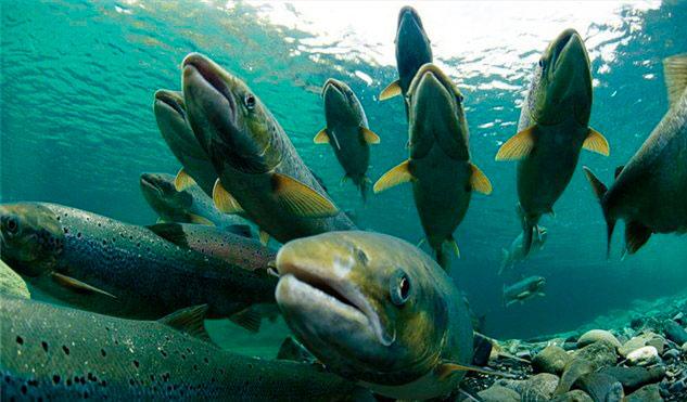 Когда снимается запрет на рыбалку?