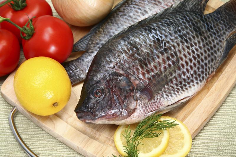 Что за рыба тилапия