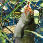 Как выбрать удилища для поплавочной ловли?
