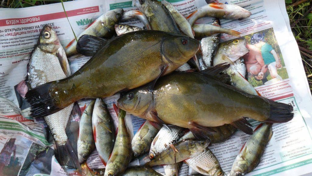Хорошая рыбалка в витебской области