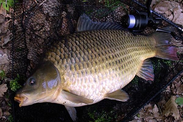 Перловка для рыбалки в термосе
