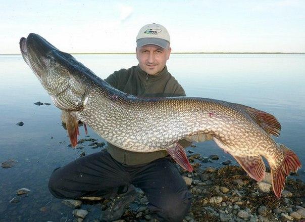 Клев рыбы в нижегородской области