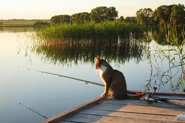 клев рыбы белгородская область