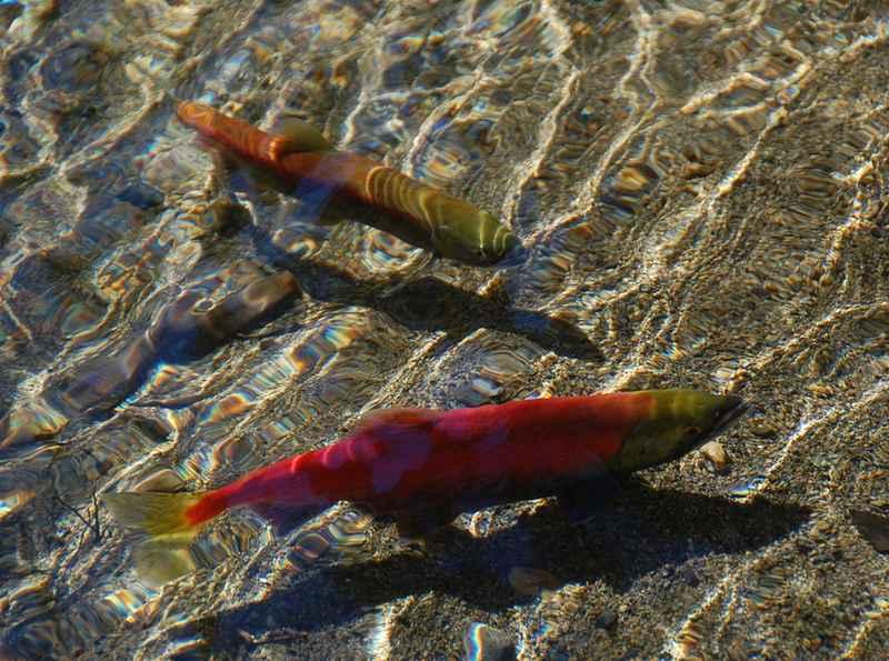 2 рыбы