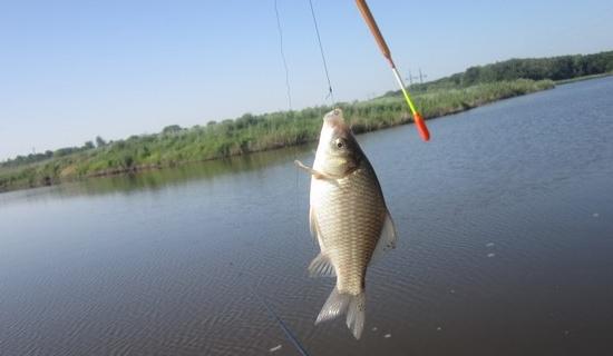 Ловля карася в мае на поплавочную удочку