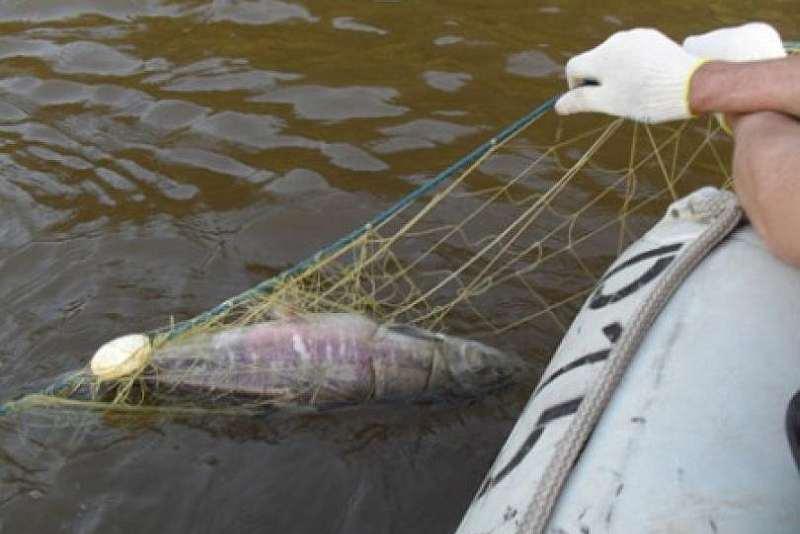 Рыба поймана