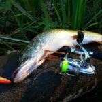 Клев рыбы в Донецкой области