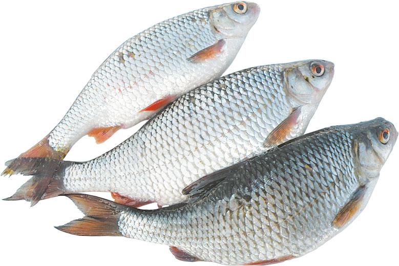 Рыба сорожка
