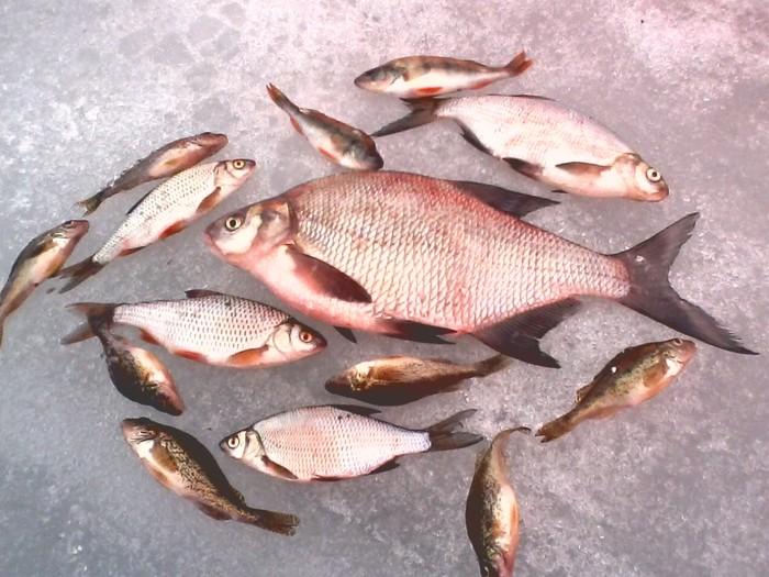Форум рыбалка в свердловской области