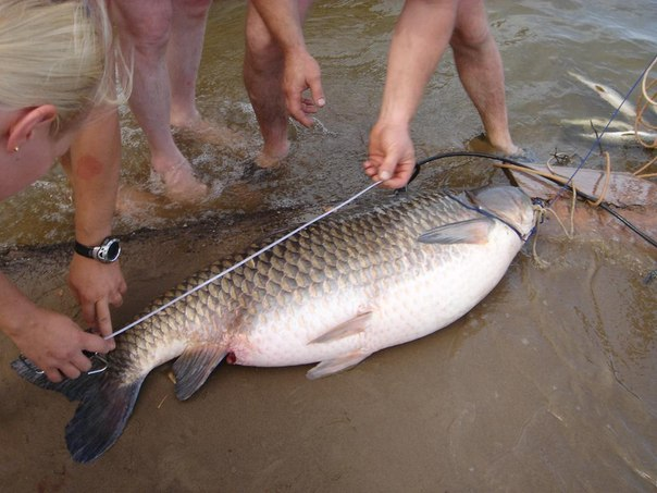 Рыбалка на дону в воронежской области