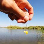 Как правильно насаживать кукурузу на крючок?