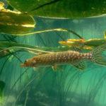 Клев рыбы в Киеве: где и какую рыбу ловить?