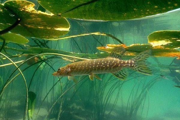 Клев рыбы в киеве