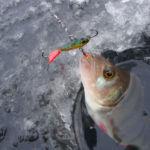Зимняя рыбалка на окуня по первому льду: место и приманка